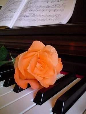 Rosa sul pianoforte.jpg