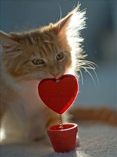 gatto col cuore.jpg